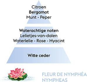 FLEUR DE NYMPHEA