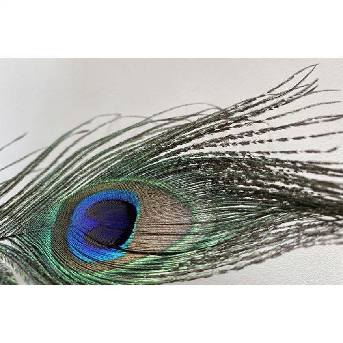 New Classics Peacock Sample 60ml 2
