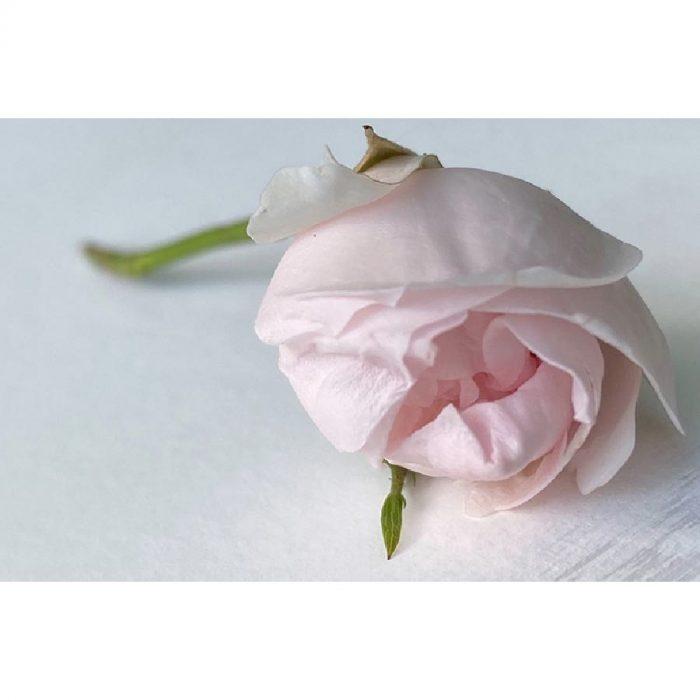 New Classics Rose White Sample 60ml 2