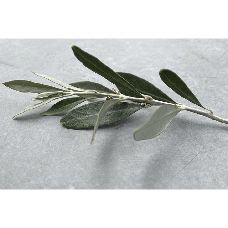Seasonalities Sample 60ml Olive 2