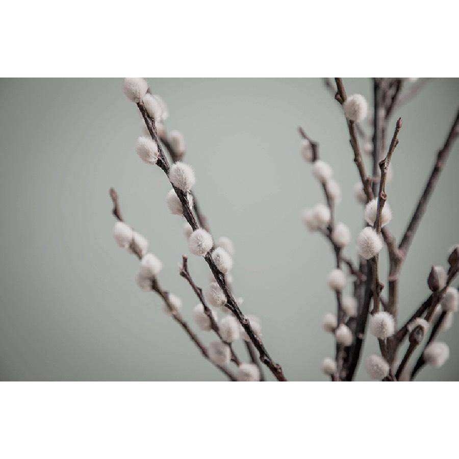 Seasonalities Sample 60ml Salix 2